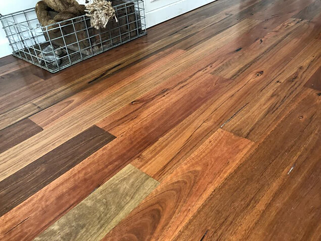 Qld Spotted Gum 02
