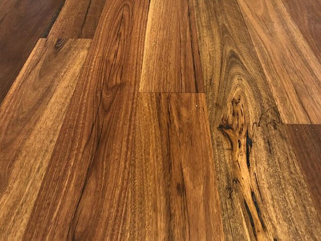 Qld Spotted Gum 03