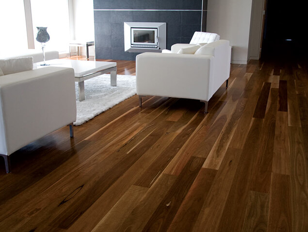 Qld Spotted Gum 04