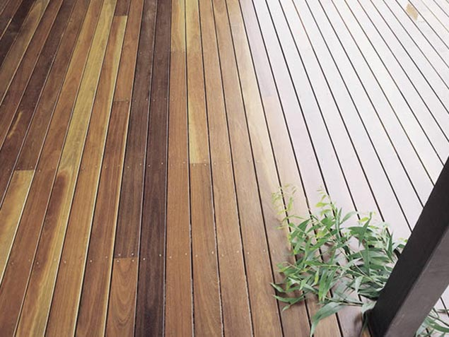 Spotted Gum 04