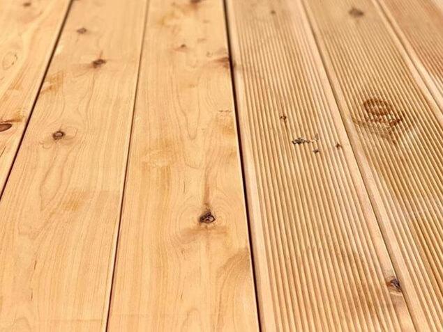 Cypress Pine 01